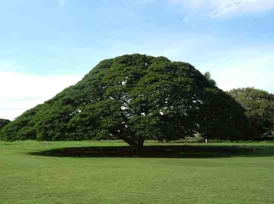 日立のCMでよく見た!この木なんの木のモアナルア・ガーデンズ