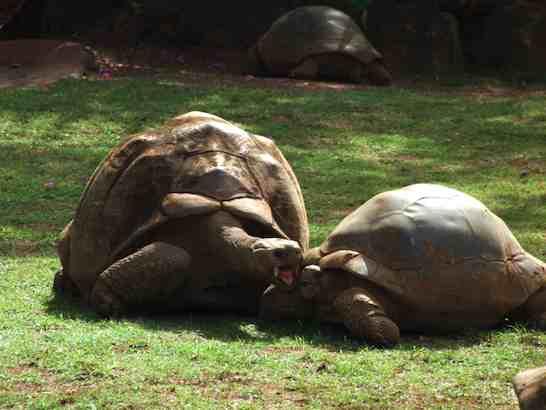 日本の動物園とはちょっと違う!ホノルル動物園
