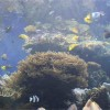 ワイキキ水族館(屋内編)、音声ガイドを聞きながら魚たちを鑑賞する