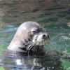 ワイキキ水族館(屋外編)、ハワイアンモンクシール観察とヤドカリ体験