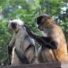 ホノルル動物園、閉園時間1時間15分前の入場
